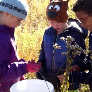 Seed collecting