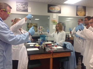 The group simulated a lab procedure that separates molecules by charge and size using agarose gel electrophoresis.