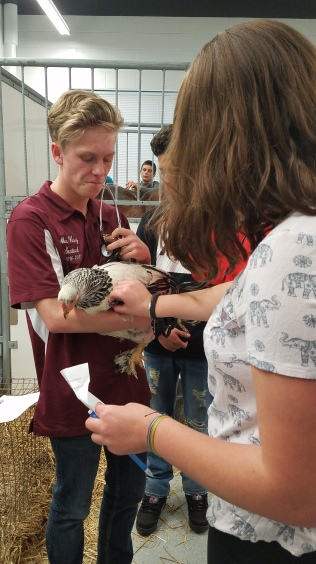 Students in the Animal Science listen to heartbeats .